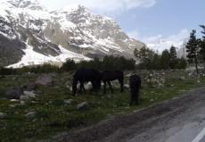 Elbrus2015P1210232