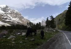 Elbrus2015P1210233